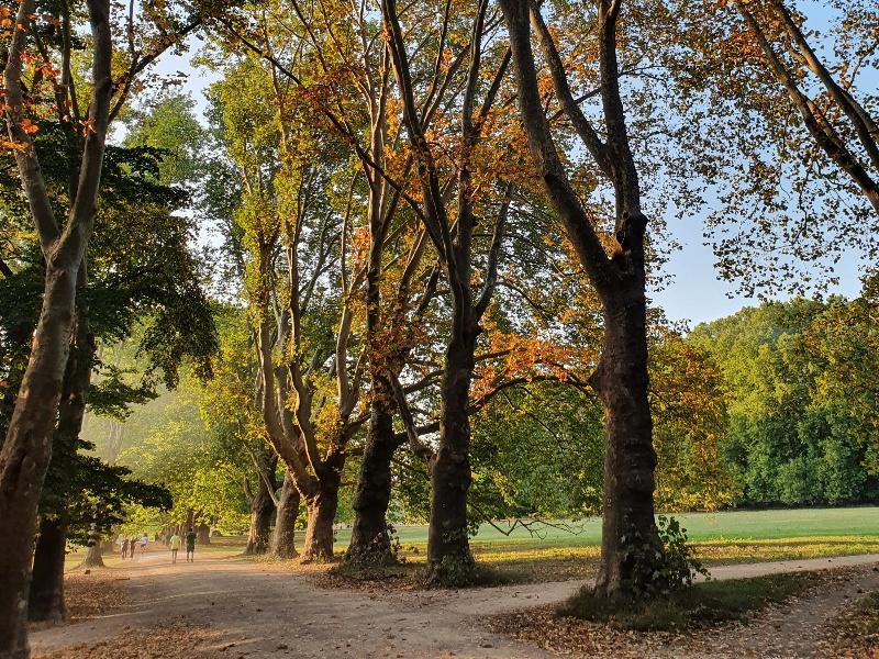 Gedanken in Bewegung bringen beim Coaching-Walk in Koeln