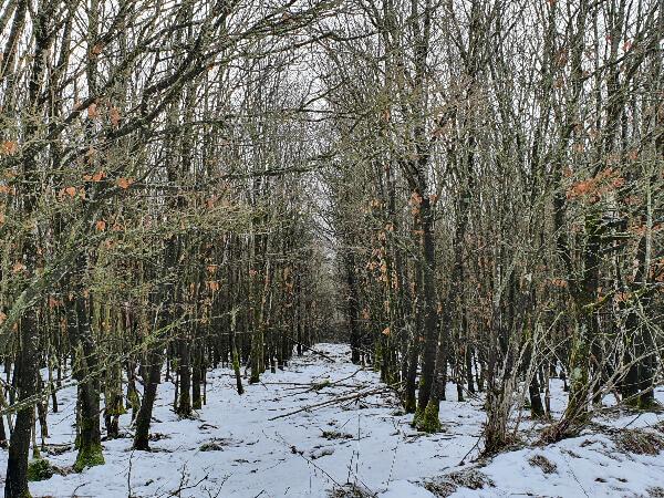 Wald bei Kronenburg-1